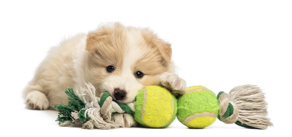 dog_with_ball_shutterstock_129934682